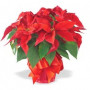 Agnes Flanagan Chapel will be beautifully decorated with poinsettias for the Annual Holiday Servi...