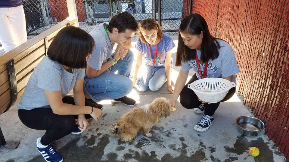First-year students volunteer with Oregon Humane Society as part of New Student Orientation Service Day.